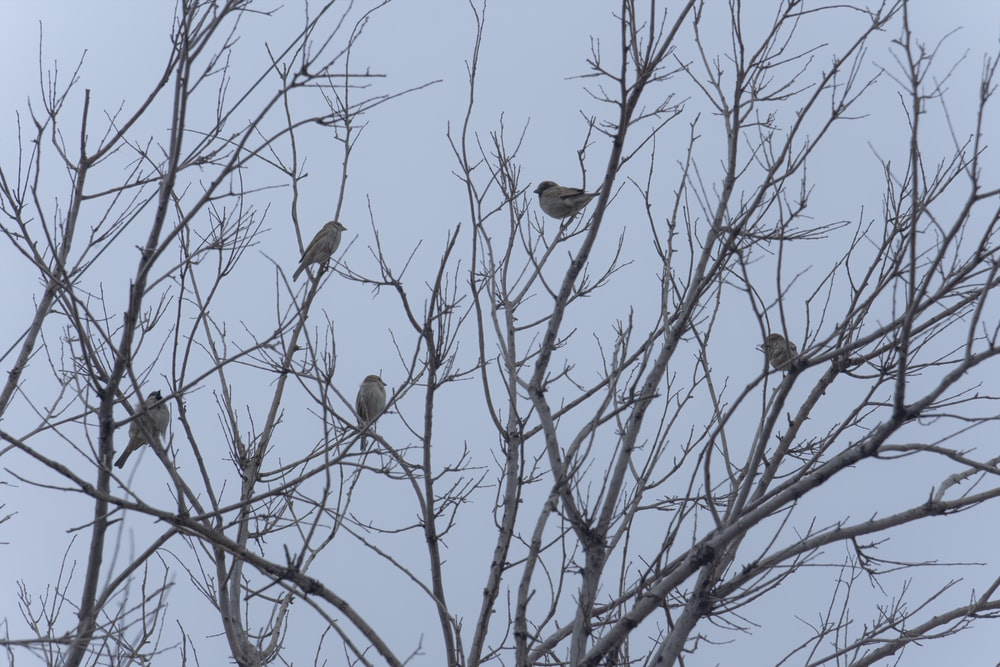 brown birds on bare tree during daytime