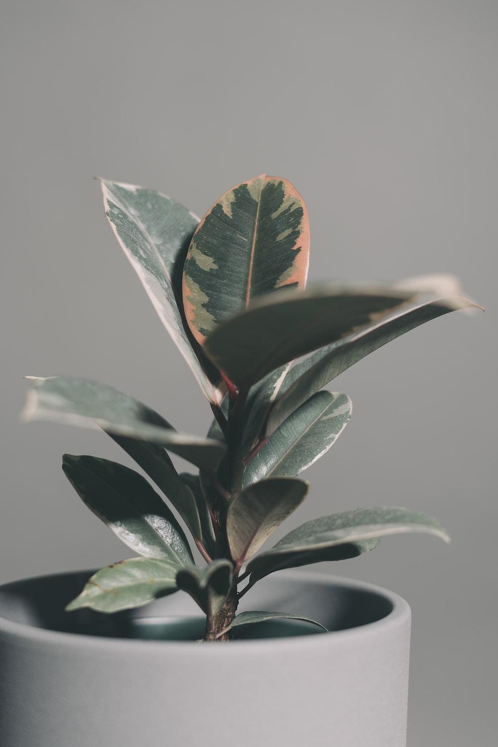 green plant in black pot