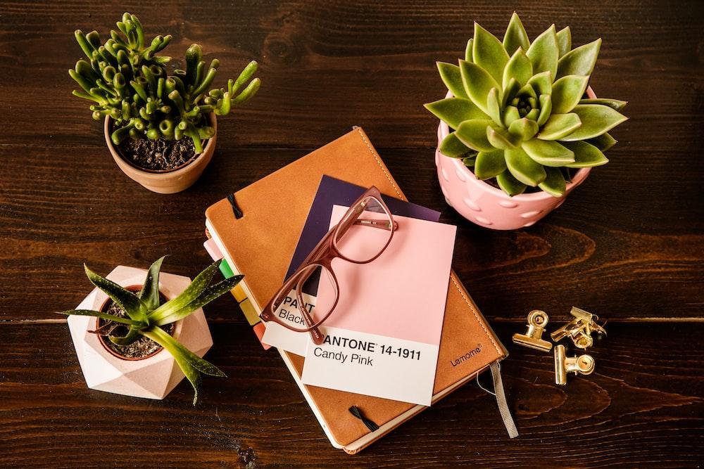 green succulent plant on pink ceramic pot beside silver keys