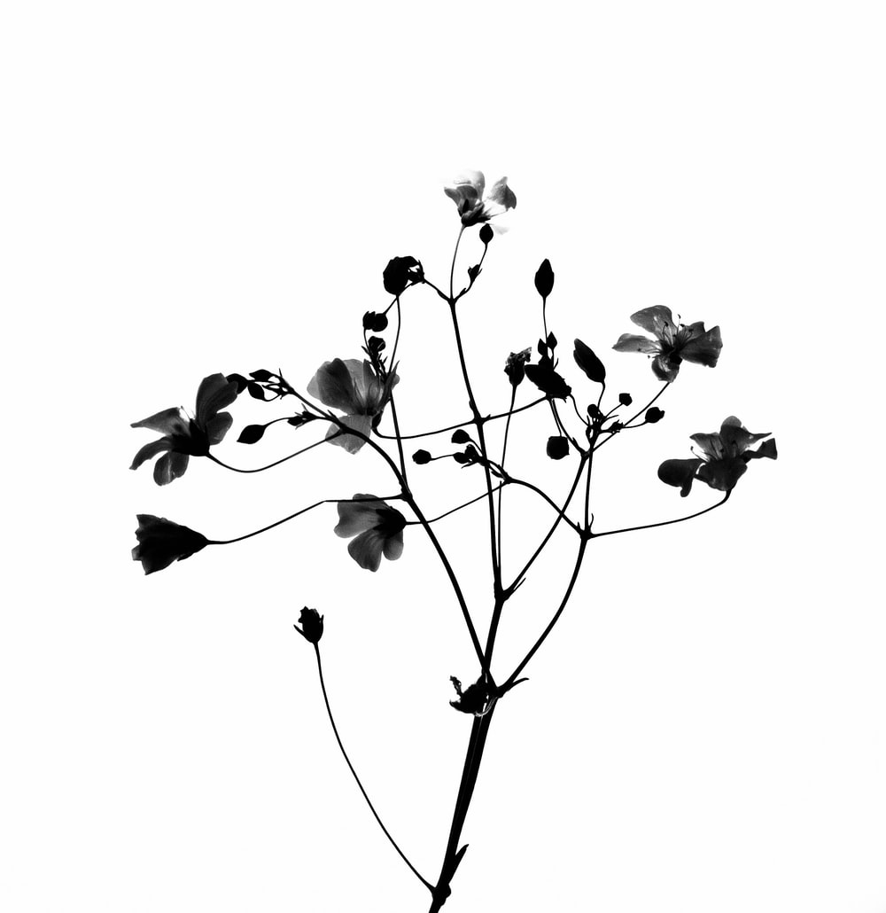 white and black flower in white background