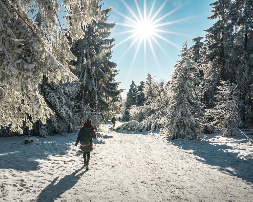 person in black jacket and black backpack walking on snow covered ground near trees during daytime