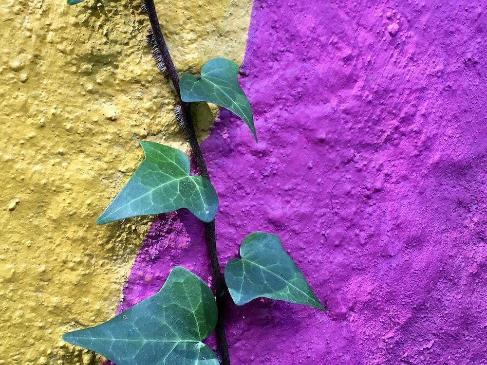 green leaf on purple textile