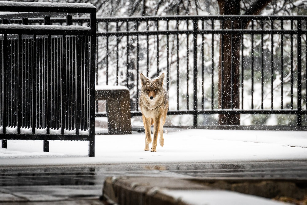 brown fox on snow covered ground during daytime