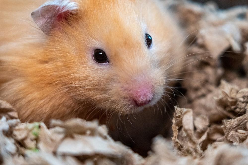brown hamster on brown textile