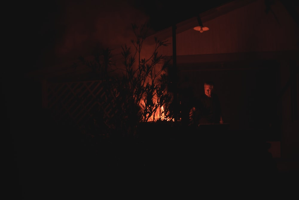 person standing near green plant during night time