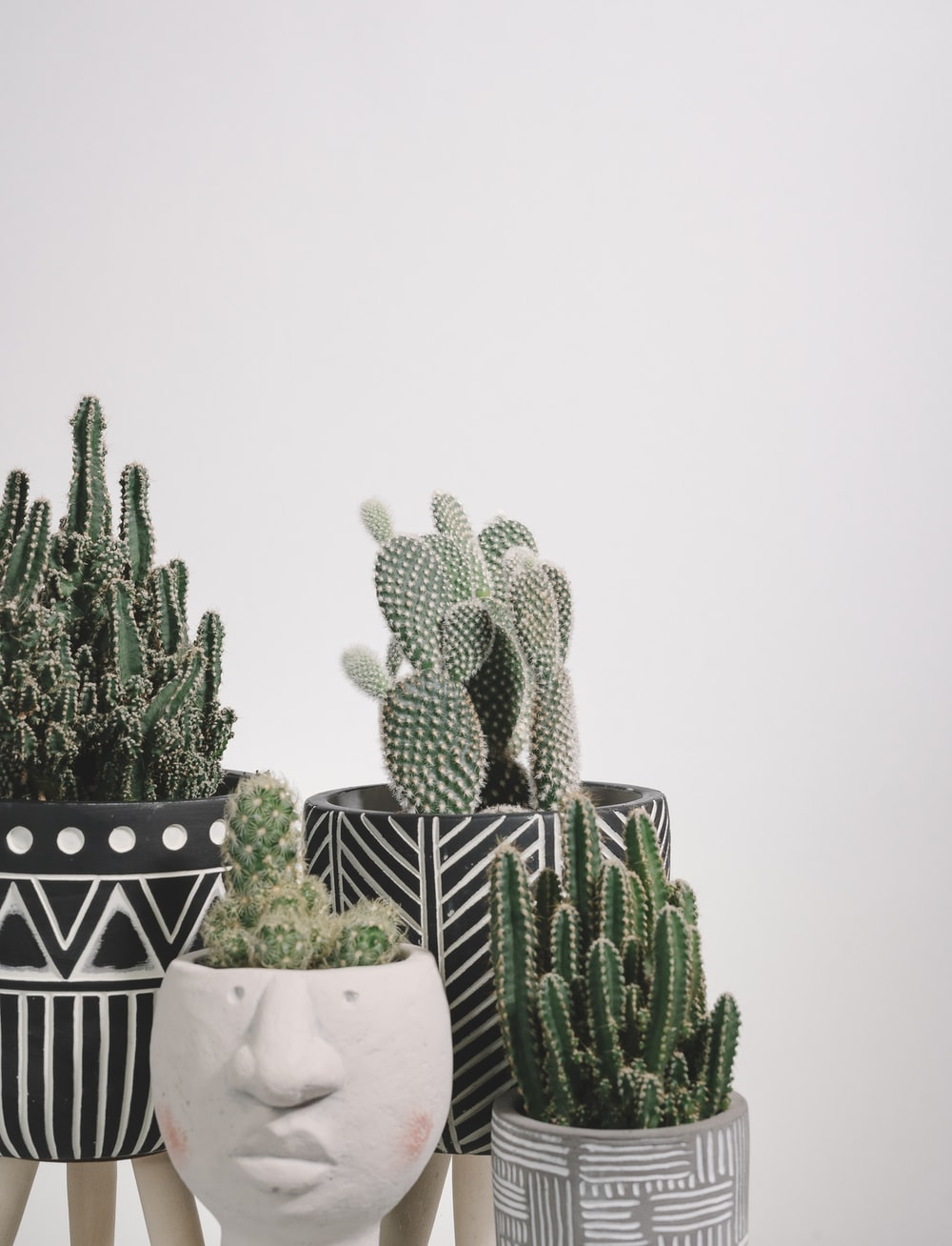 green cactus plants on white and black checkered table