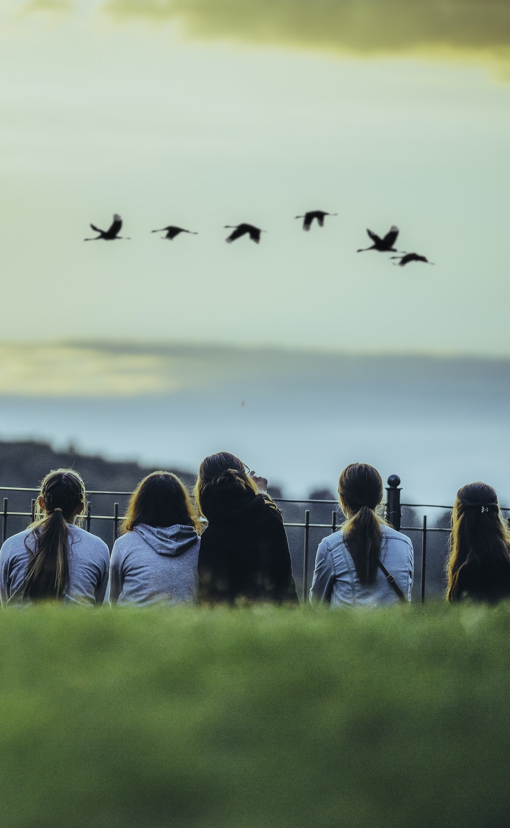 woman in blue long sleeve shirt looking at birds