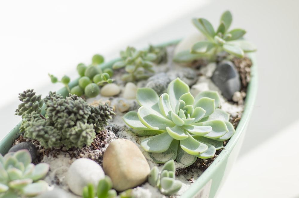 green and white plant on white ceramic bowl