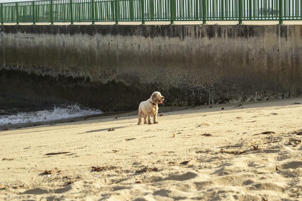 white short coated dog on seashore during daytime