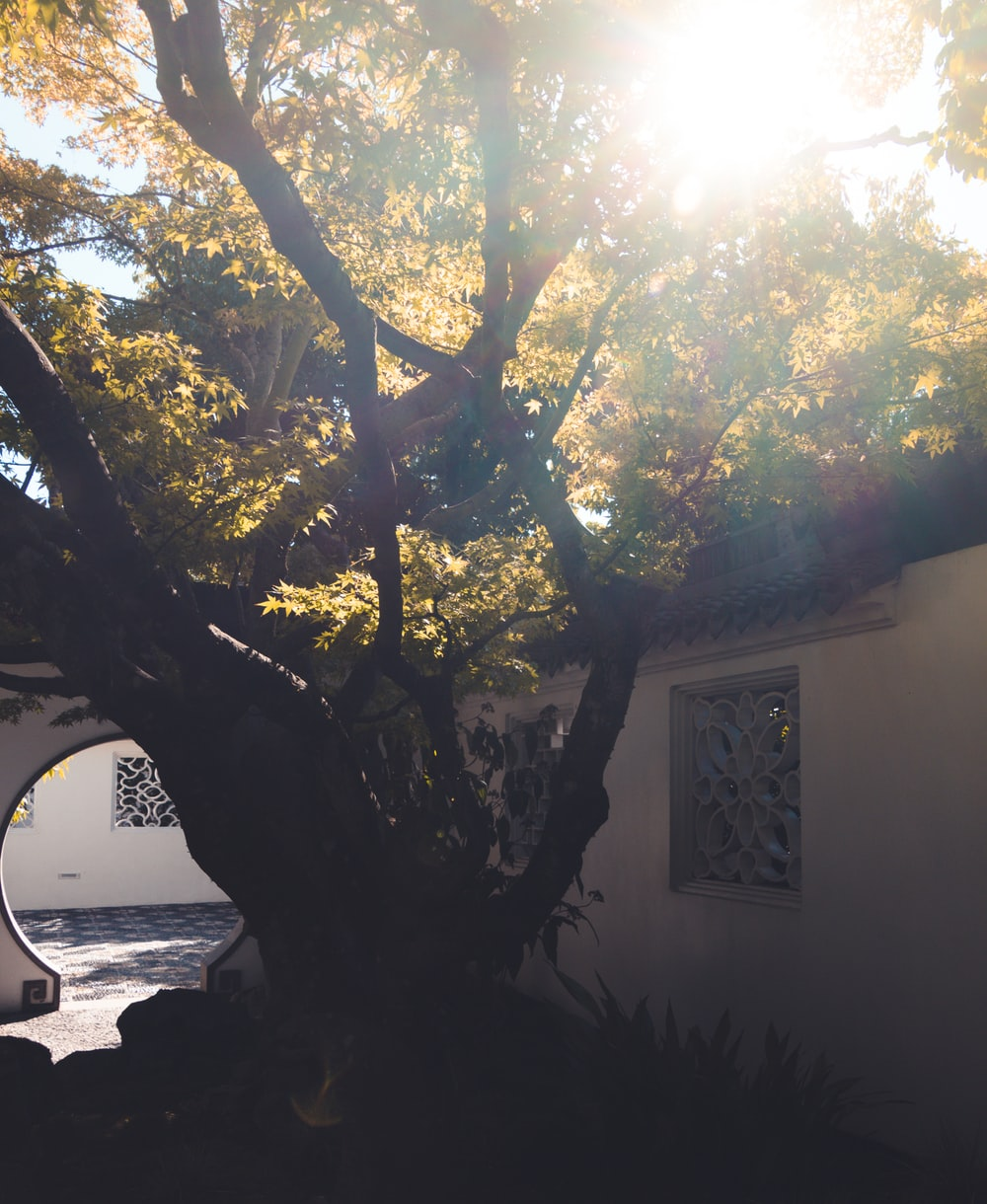 green tree beside white concrete house during daytime