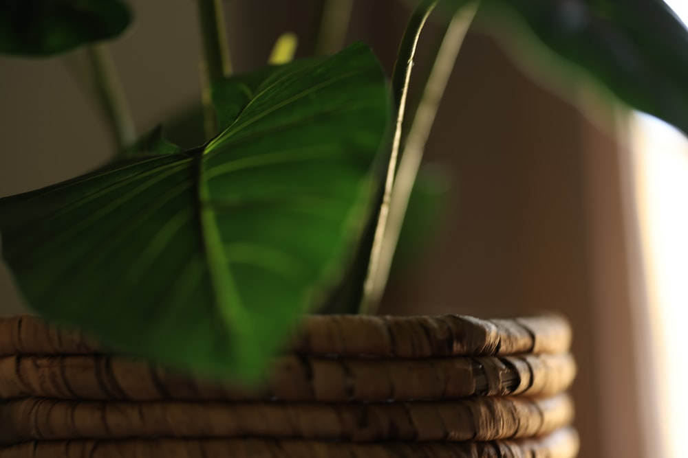 green leaf plant near brown woven basket