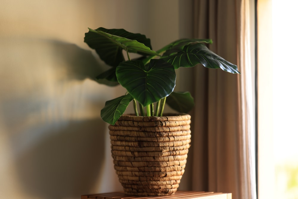 green plant in brown woven basket