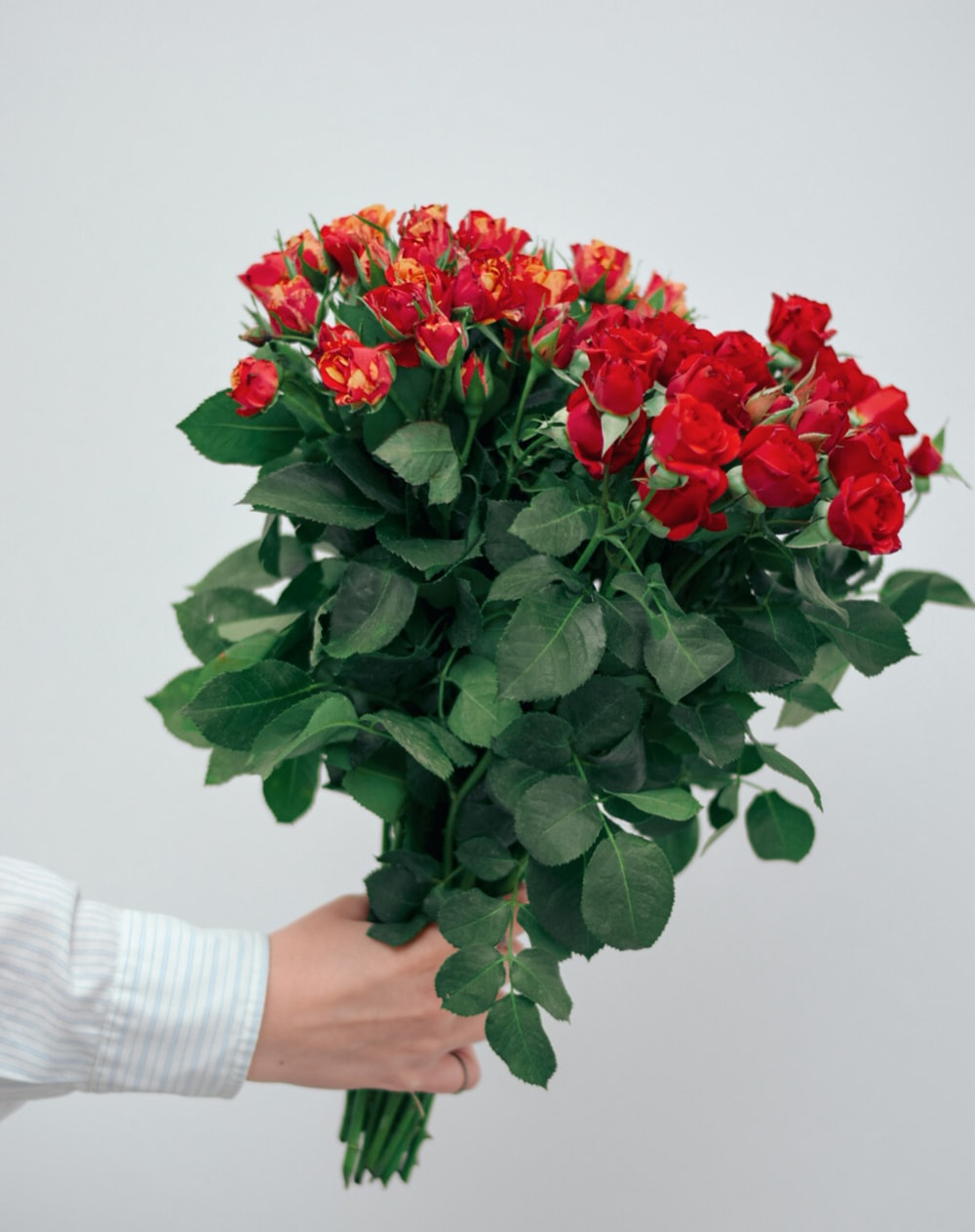 red roses bouquet on persons hand