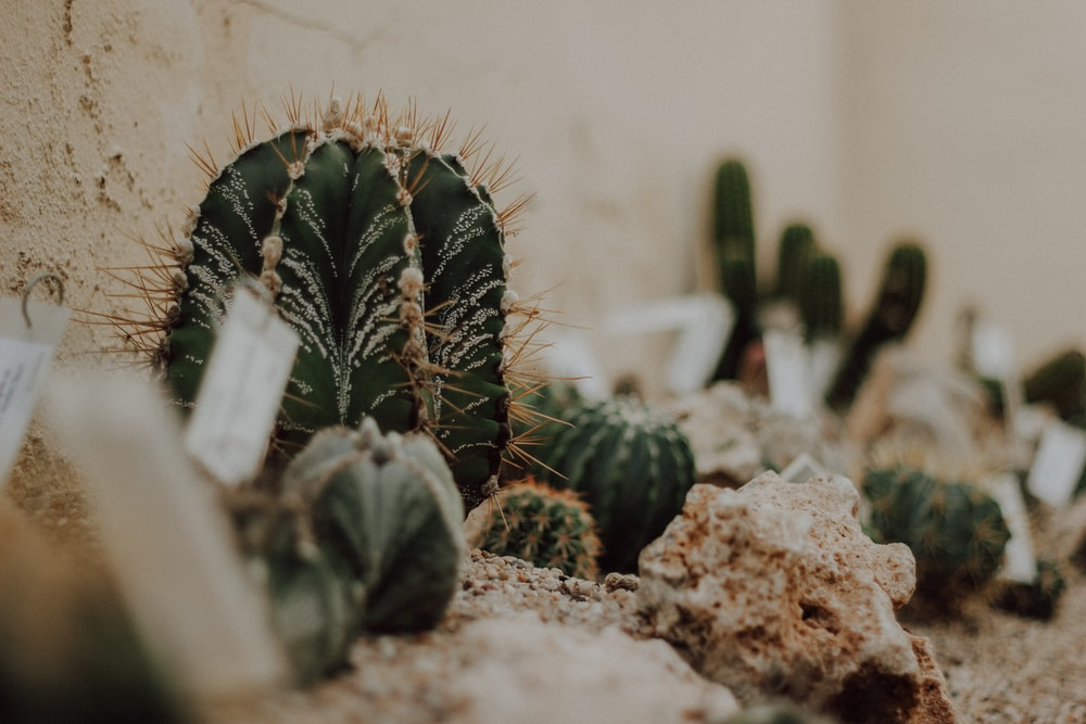 green cactus plant on brown soil