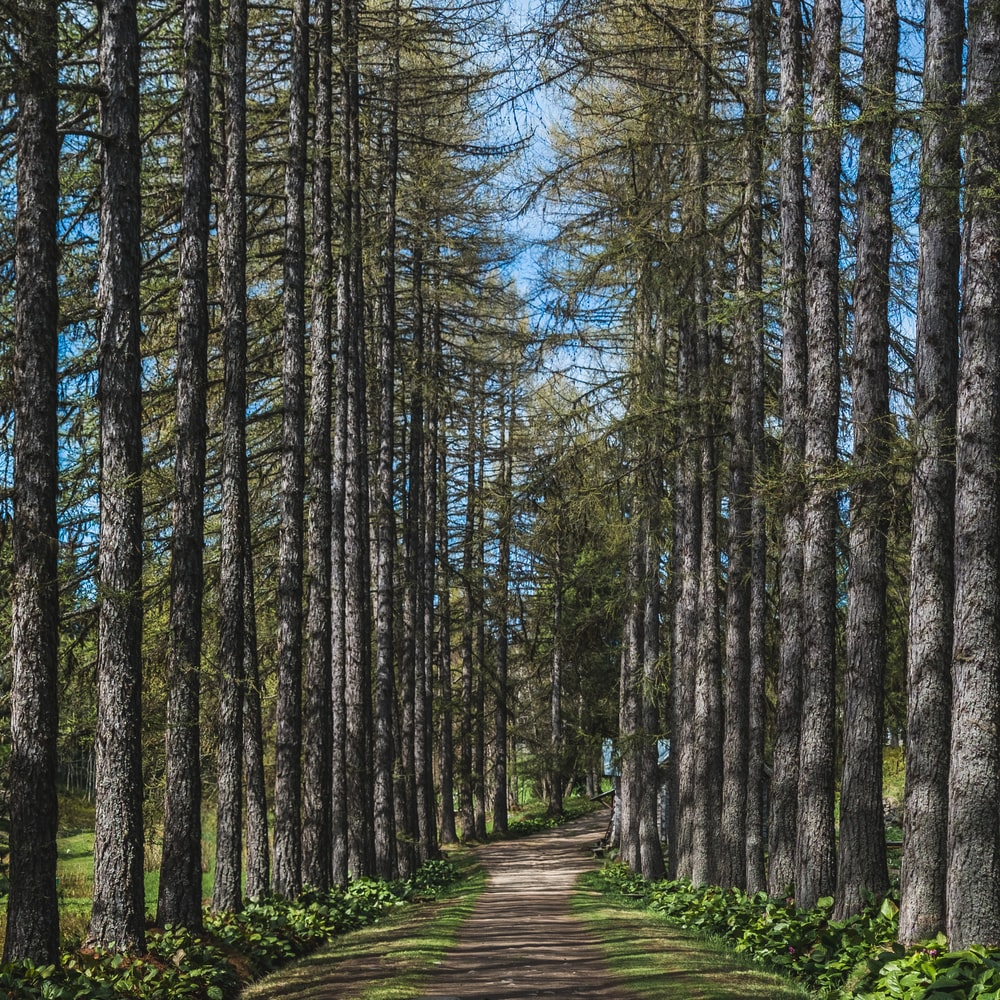 pathway between trees during daytime