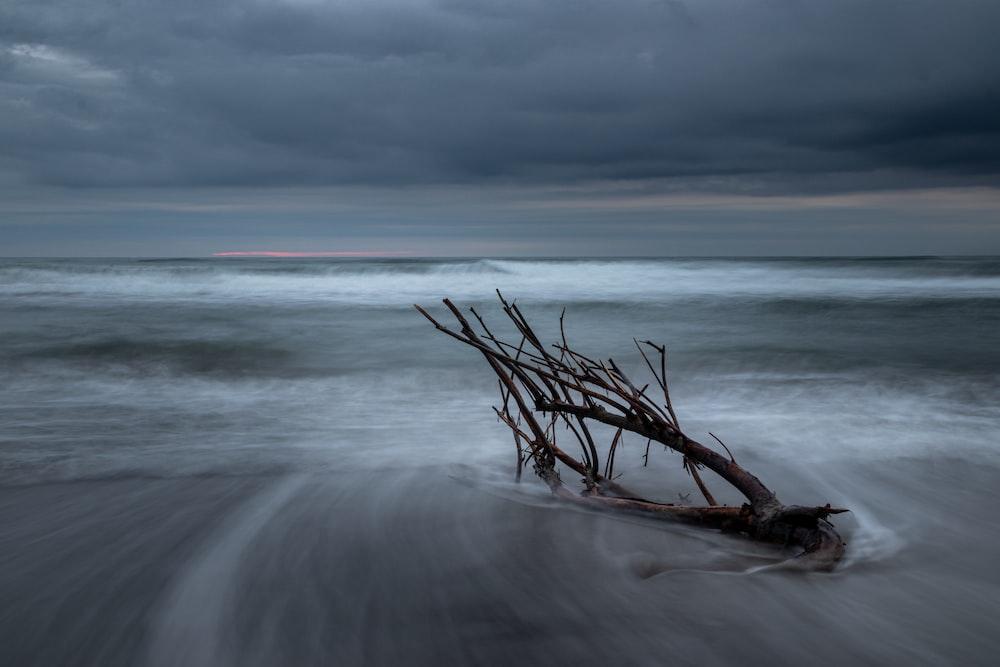 brown tree branch on seashore during daytime