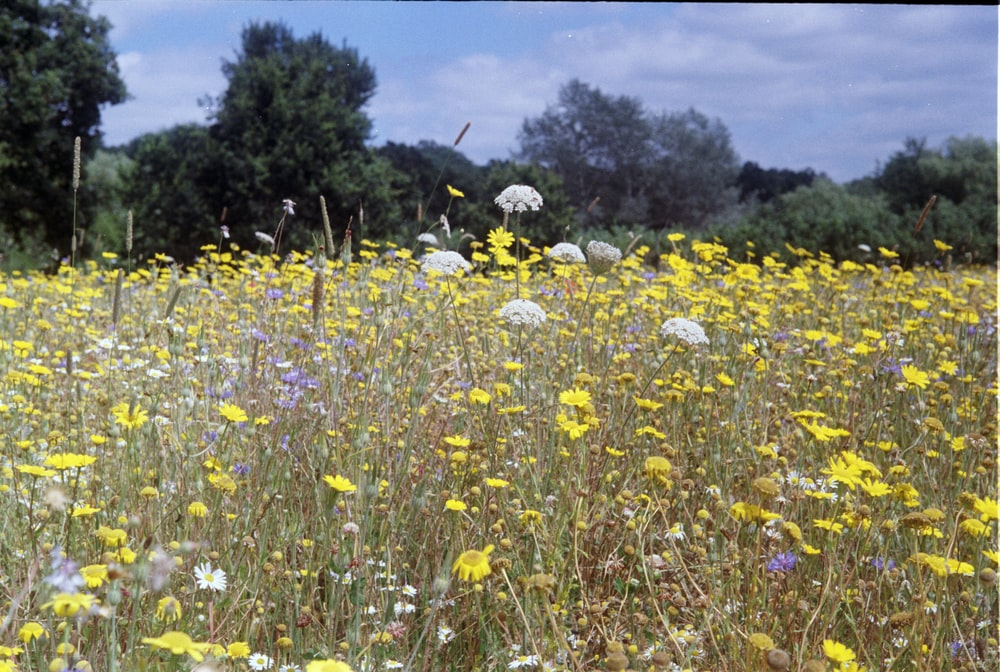 yellow and purple flower field under blue sky during daytime