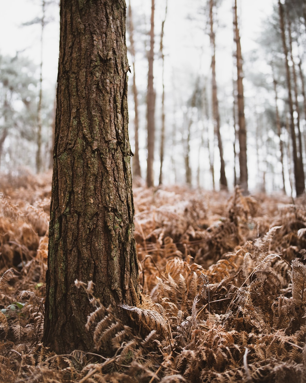 brown tree trunk on brown grass field