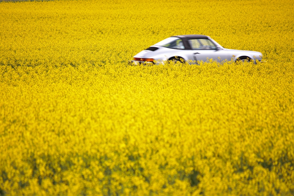 white and black car on yellow flower field during daytime