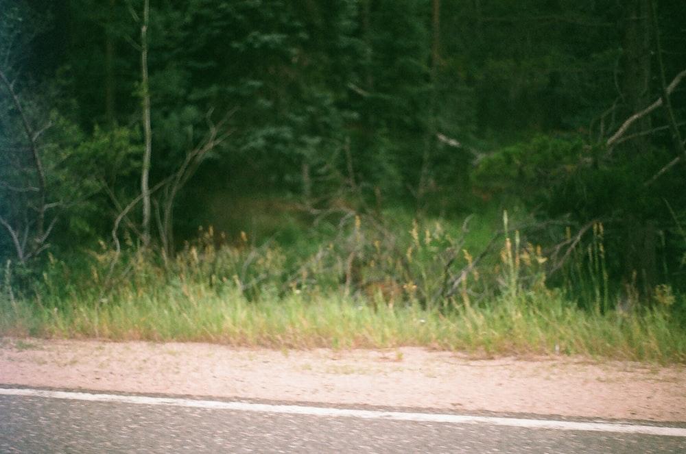 green grass field beside gray concrete road