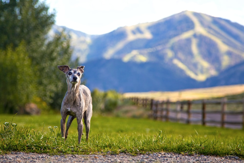 brown and white deer on green grass field during daytime pet wipes