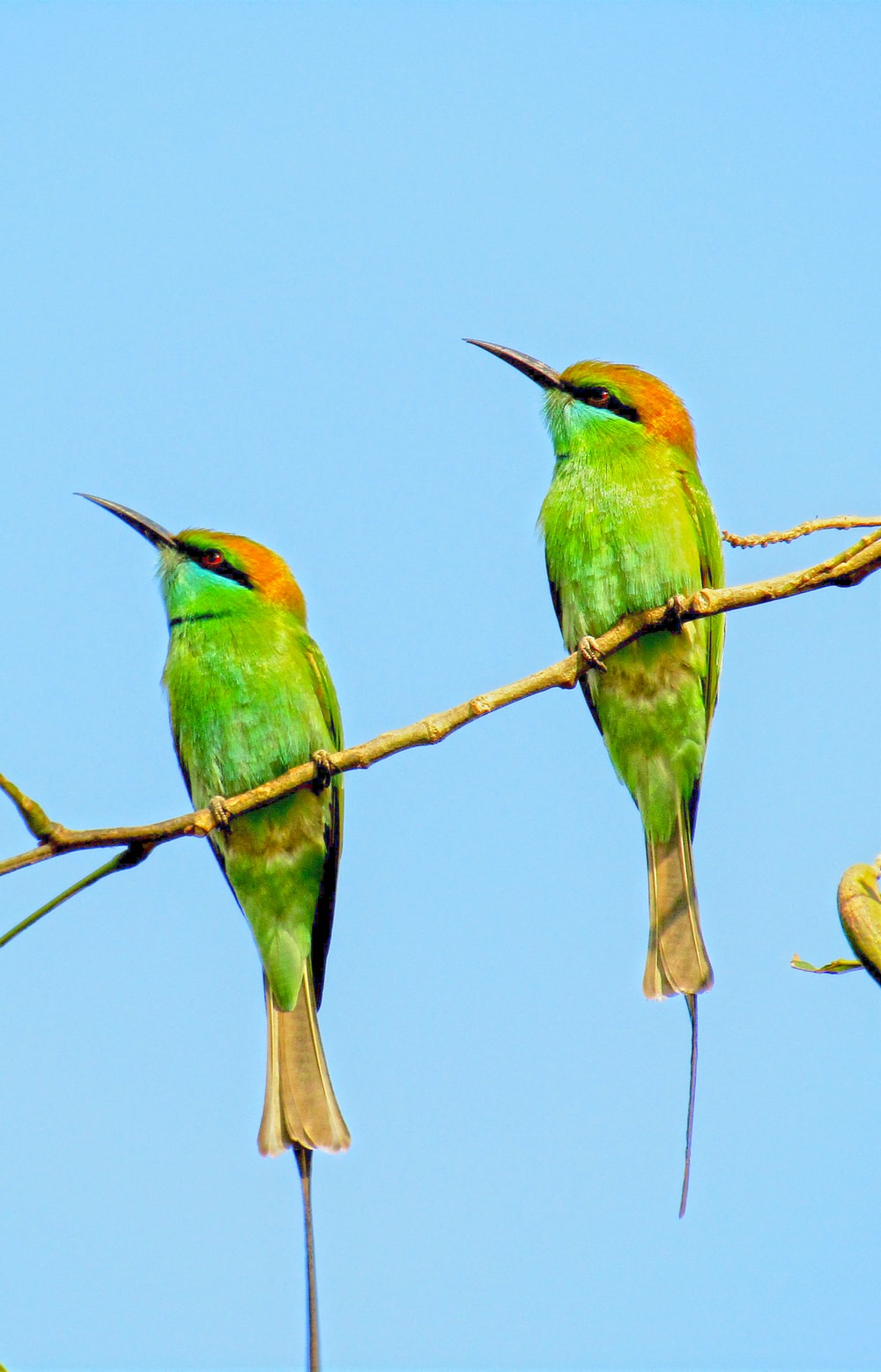 green and brown birds on brown tree branch