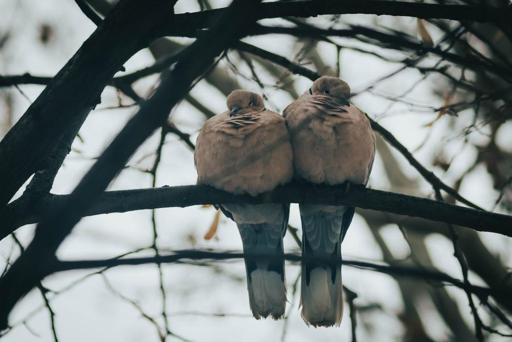 three brown birds on tree branch