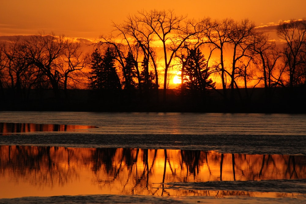 leafless trees near body of water during sunset