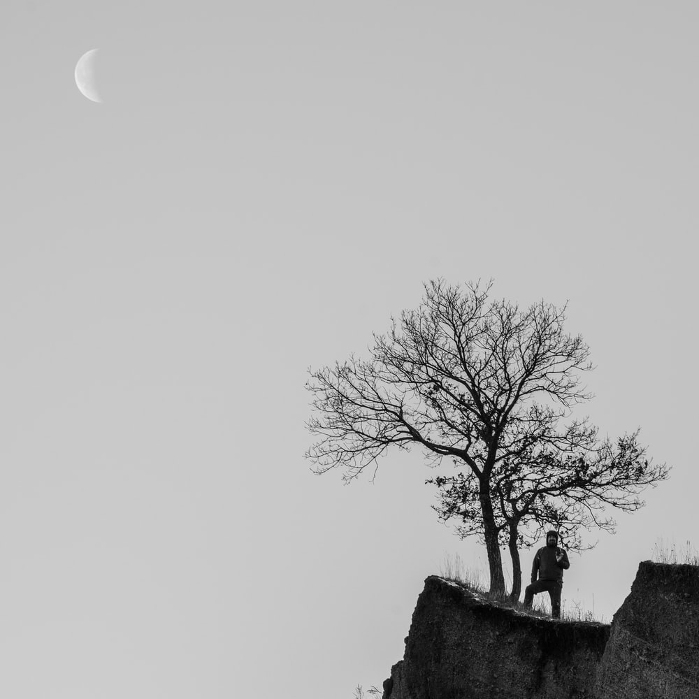 bare tree on top of hill