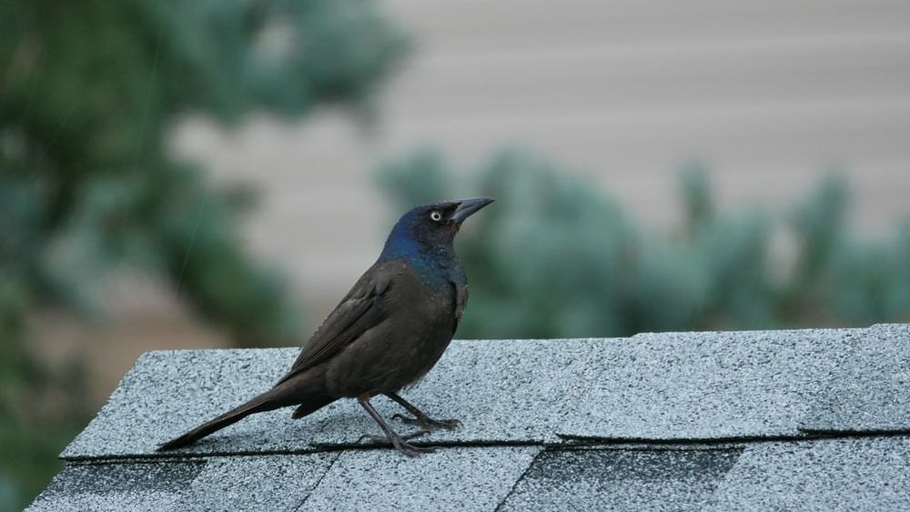 black and blue bird on gray concrete surface during daytime