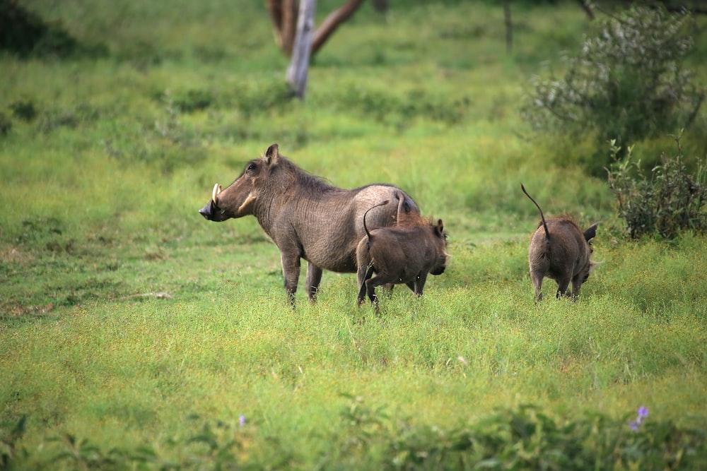 brown rhinoceros on green grass field during daytime