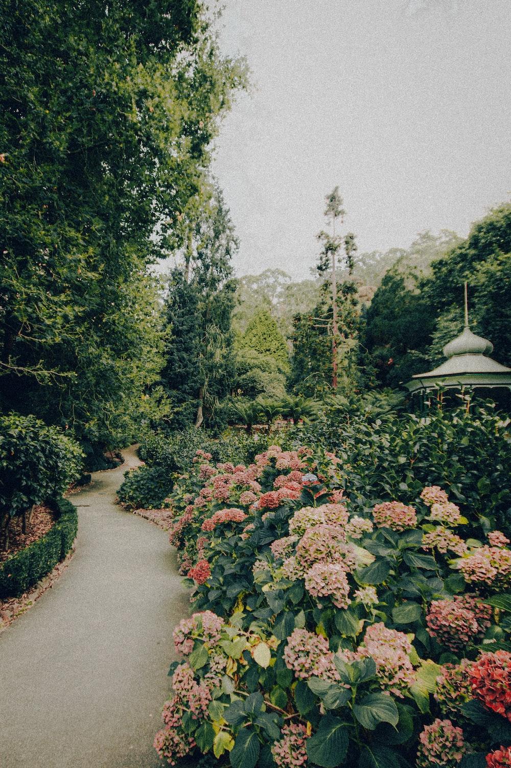 green and orange flower garden