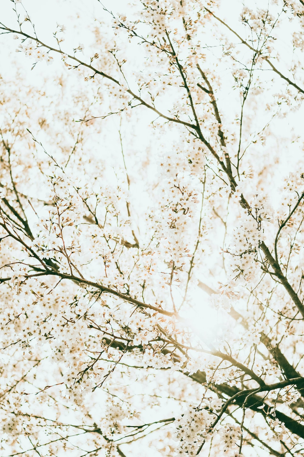 low angle photography of white leaf trees during daytime