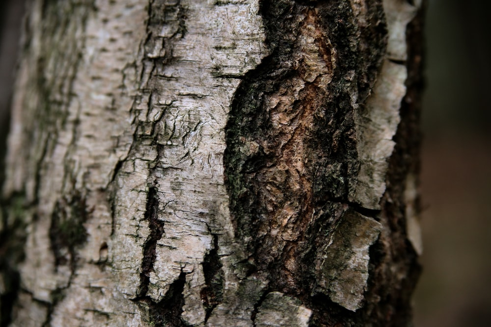 brown and black tree trunk