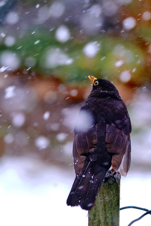 black and white bird on white snow