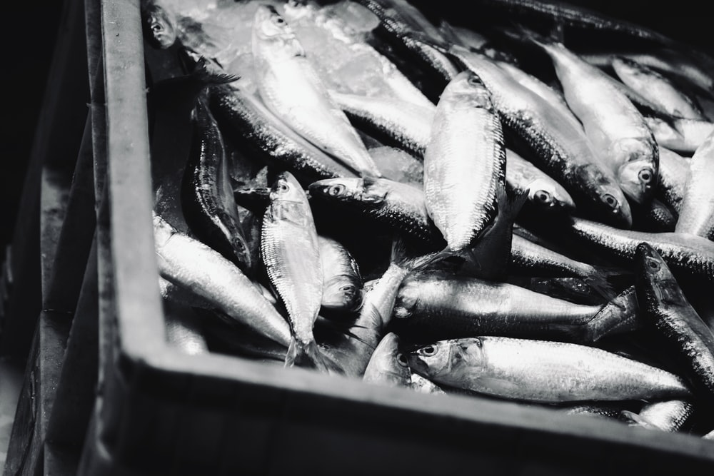 gray fish in brown wooden crate
