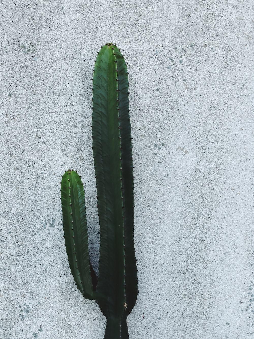 green cactus on gray concrete floor