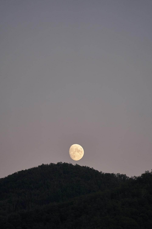 full moon over green trees