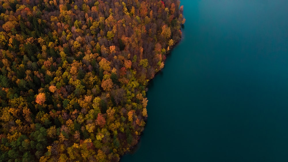 brown and green trees beside blue body of water