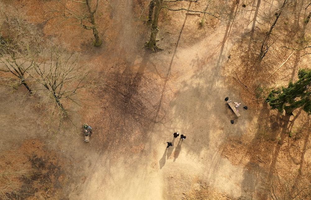 people walking on brown dirt road during daytime