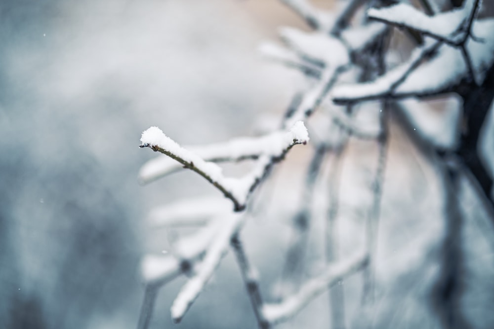 white snow on brown tree branch