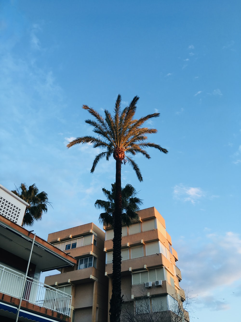 palm tree near brown concrete building during daytime