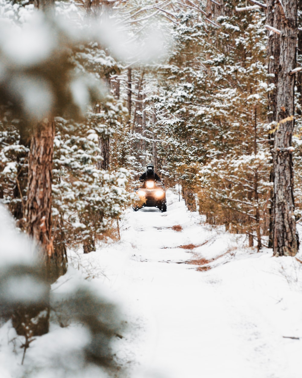 person riding on snow sled in the middle of the forest during daytime