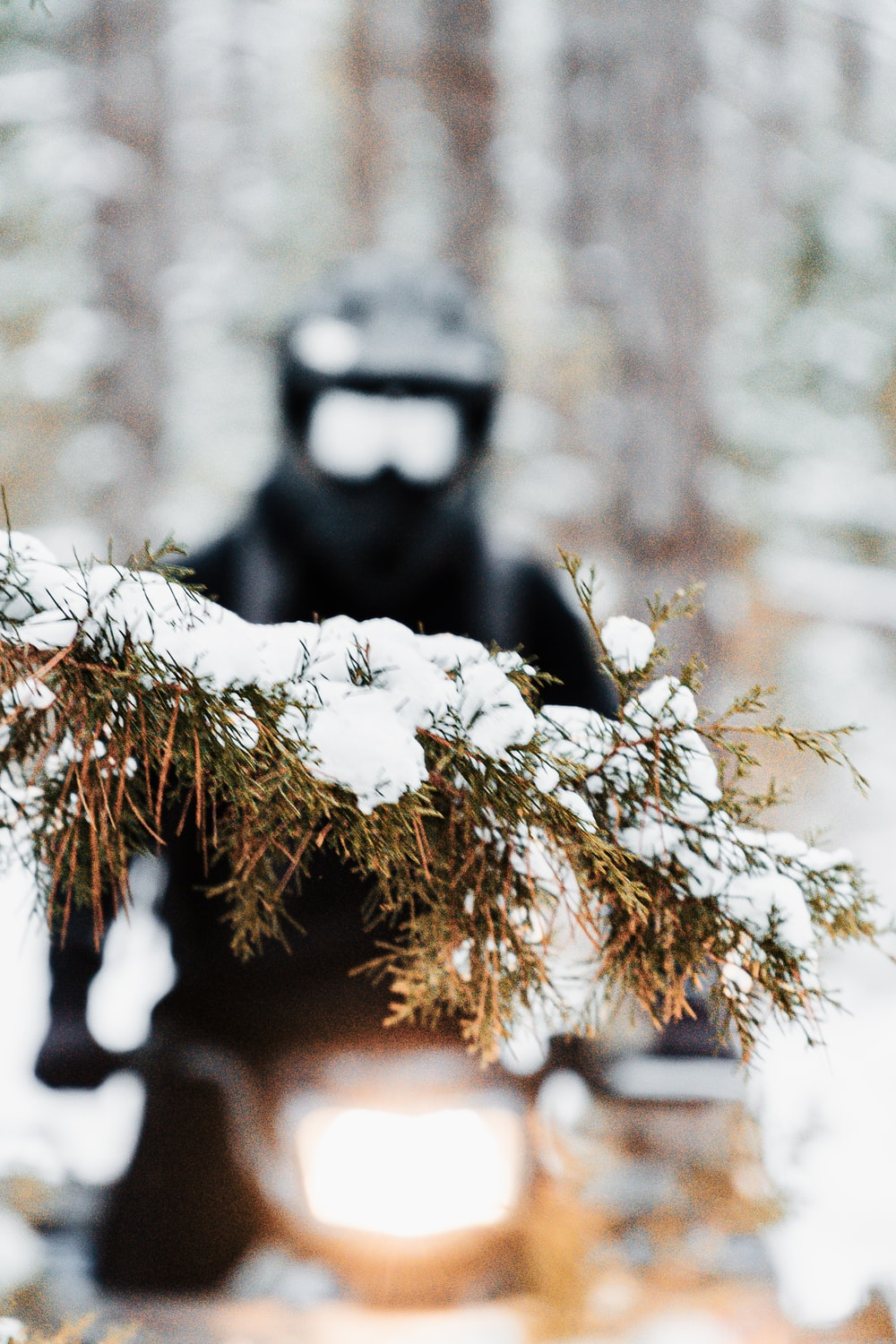 black and white monkey on brown tree branch
