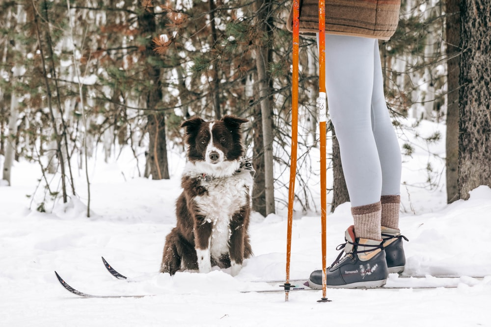 black and white border collie standing on snow covered ground during daytime