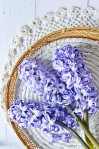 hyacinths must get growing pains living alone stories
