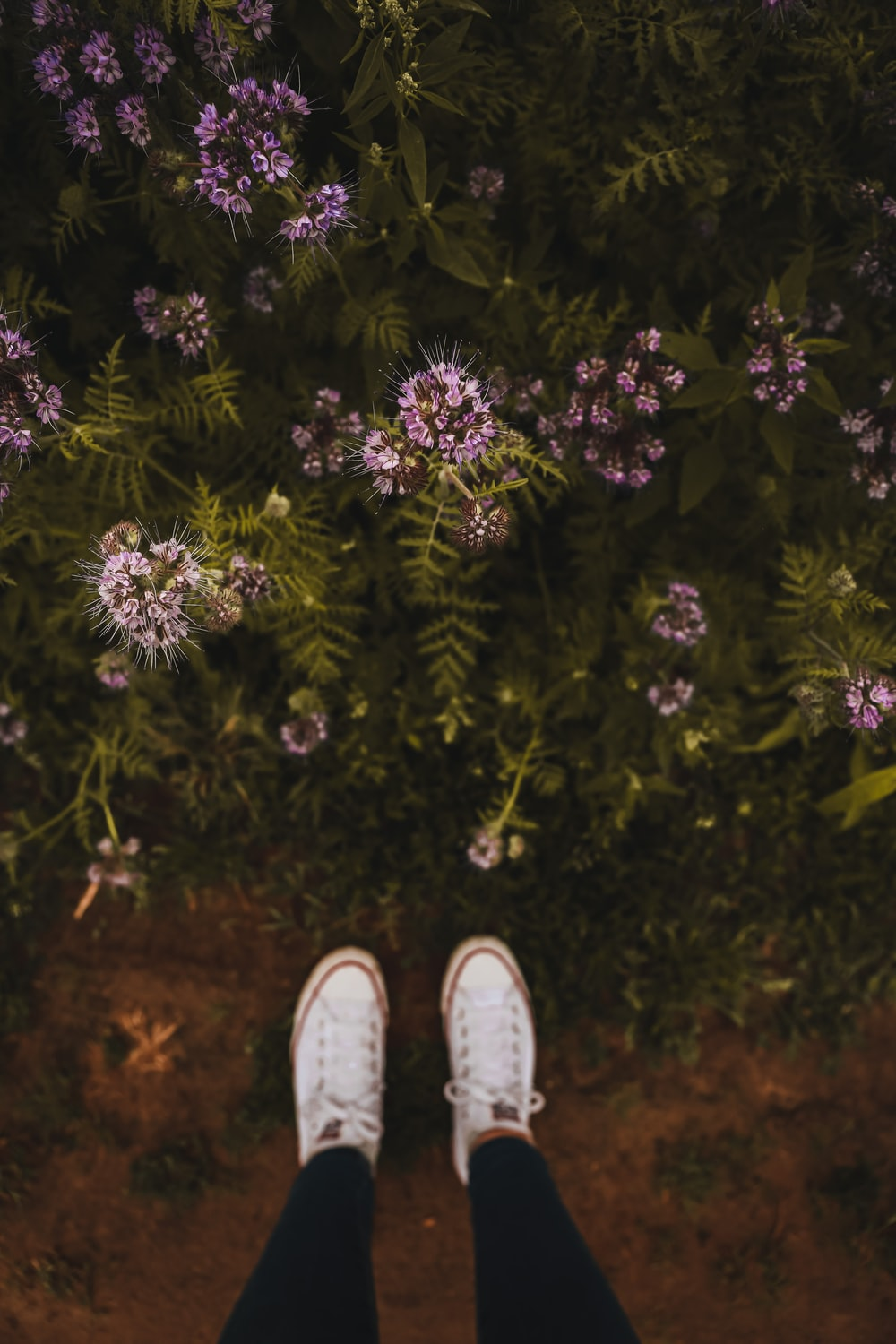 person wearing white sneakers standing on purple flower field during daytime