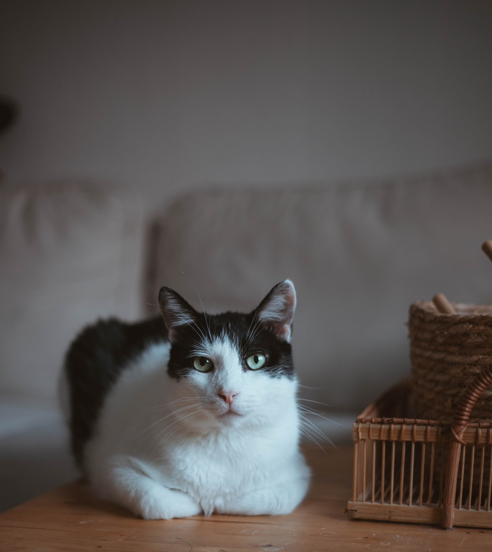 white and black cat on brown wooden table