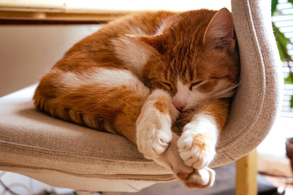 orange tabby cat lying on brown textile
