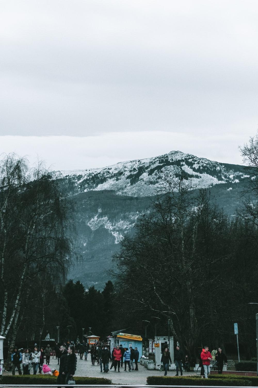 green trees near mountain during daytime